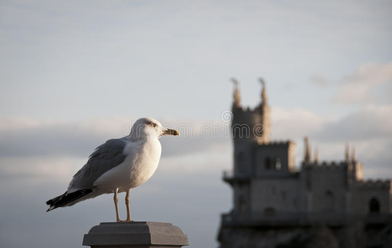Download Seagull And Swallow's Nest, Crimea, Ukraine Stock Image - Image: 22217891