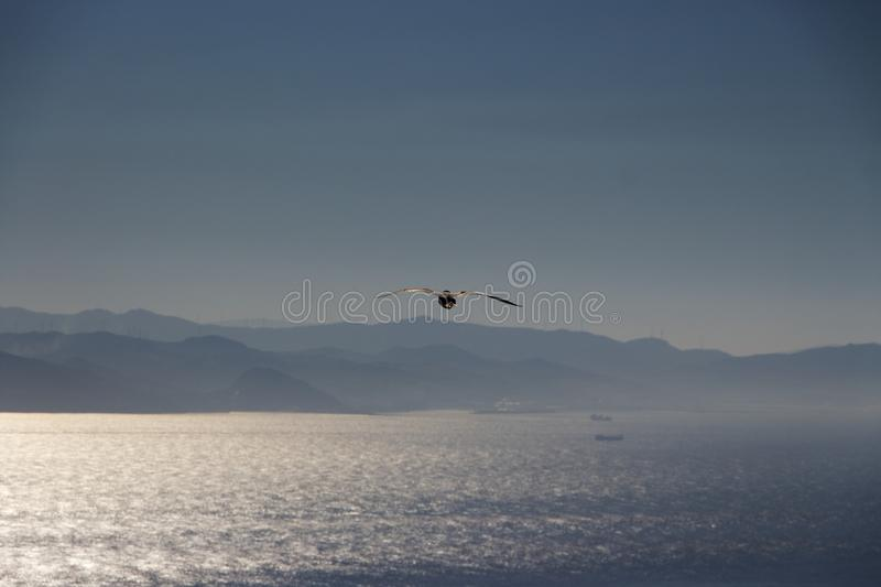 Seagull swooping over Gibraltar Strait royalty free stock image