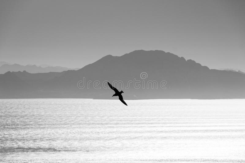 Seagull swooping over Gibraltar Strait royalty free stock photos
