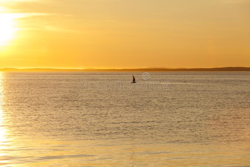 Seagull sylwetka nad morze przy kolorowym zmierzchem Pomys? harmonia i spok?j fotografia royalty free