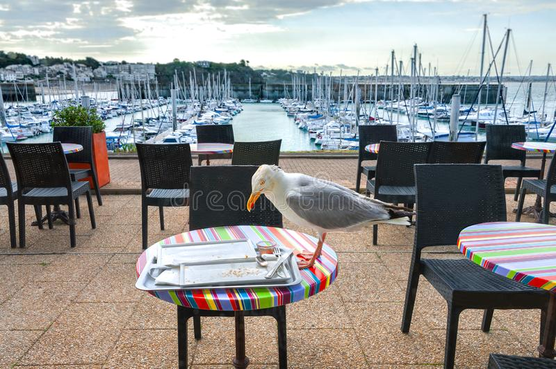 Seagull on a Table for Two. royalty free stock image