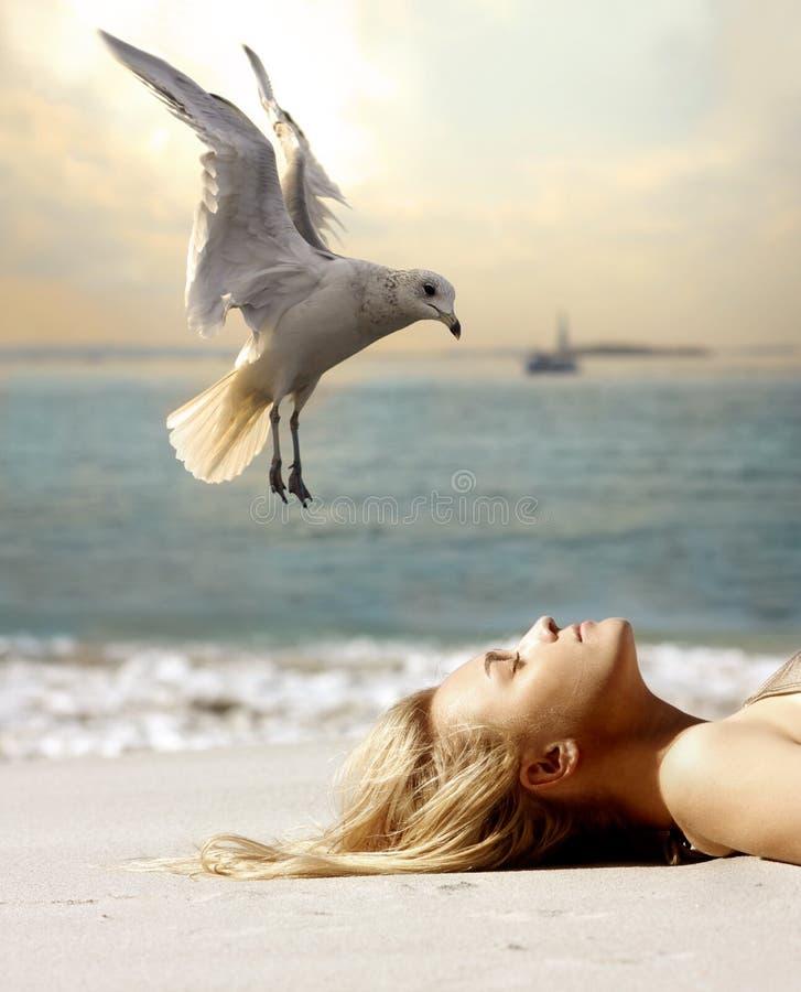 Seagull and tan stock photos