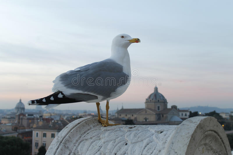 Seagull on top of Rome at sunset. A seagull on top of panoramic view of Rome, Italy, at sunset stock photos