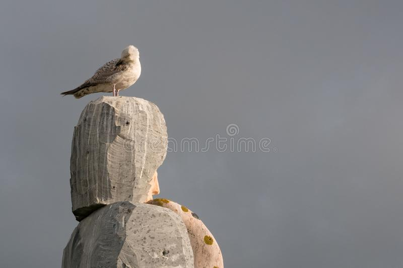 Seagull on top of stacked granite rocks preening feathers. stock photos