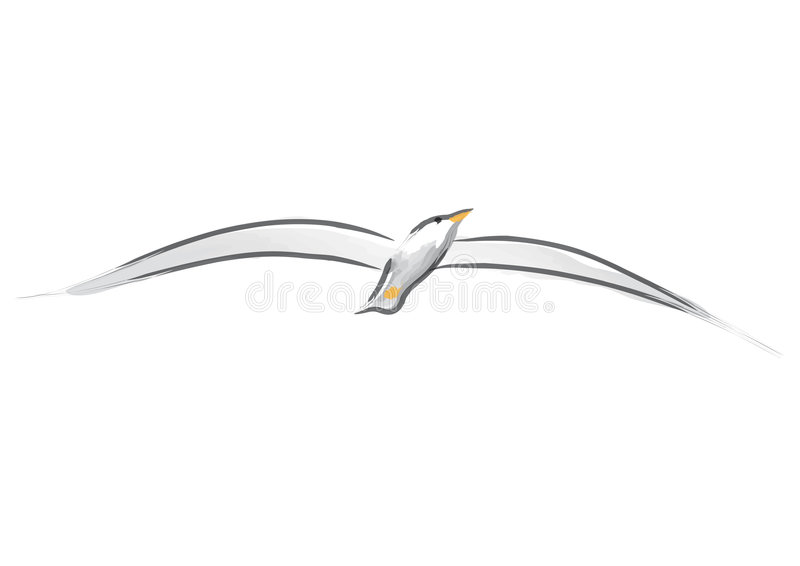 Download Seagull (vector) stock vector. Illustration of gull, boundless - 8517536