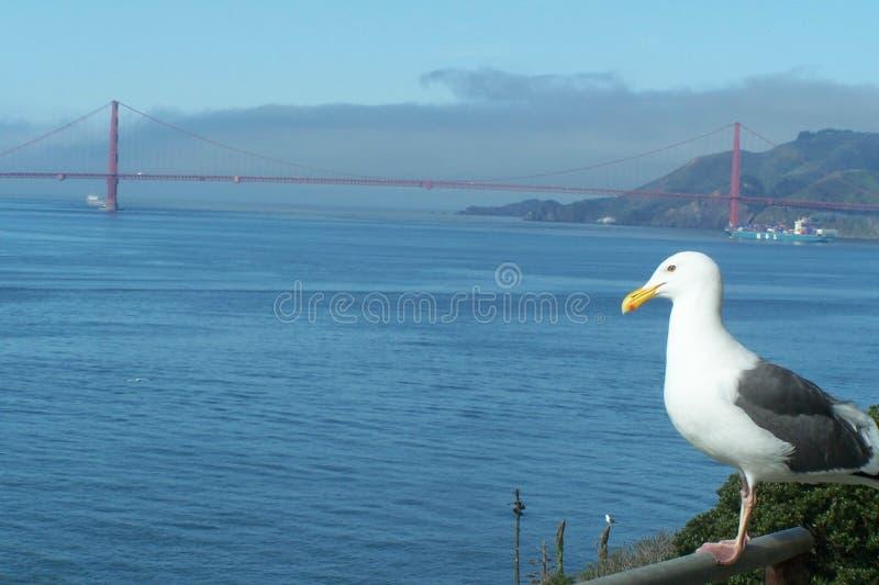Download Seagull with a view stock photo. Image of bridge, alcatraz - 29621166