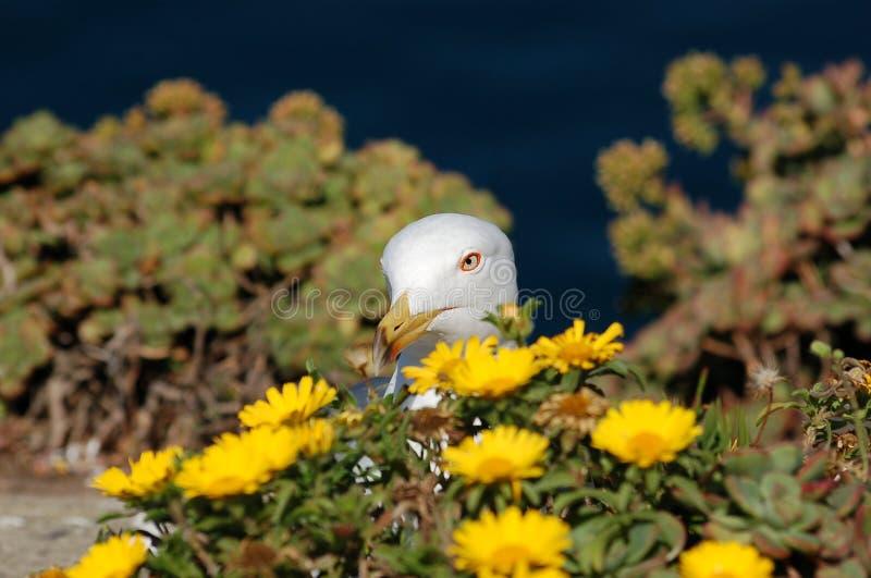 Seagull w kwiatach obrazy stock