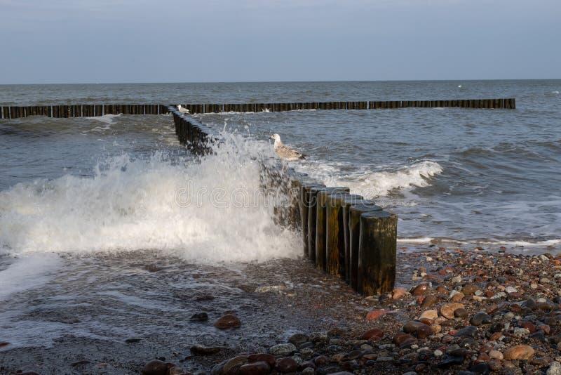 Seagull w połowu porcie W tle sieci rybackie i obrazy royalty free