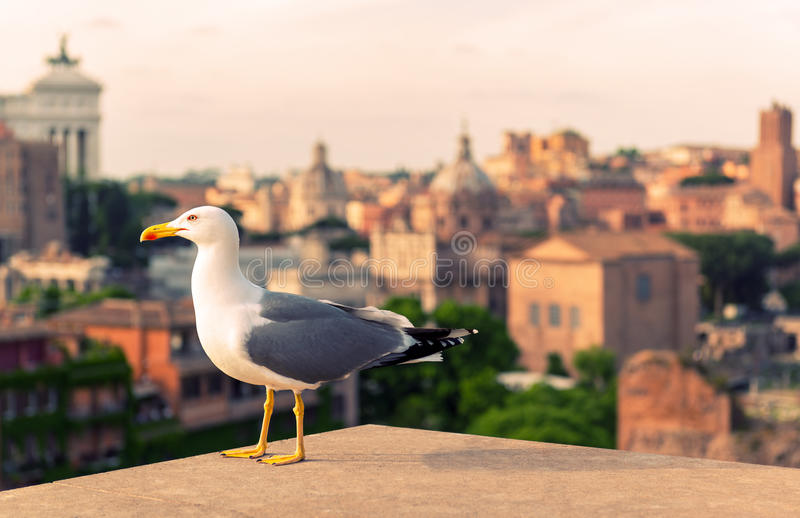 Seagull w Romańskim forum przy zmierzchem w Rzym obrazy royalty free