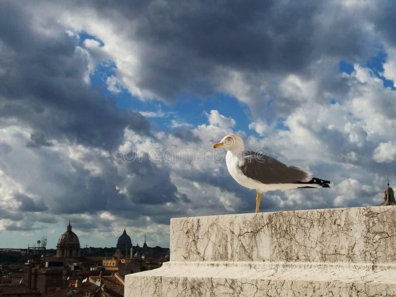 Seagull w Rzym przeciw niebu zdjęcie royalty free