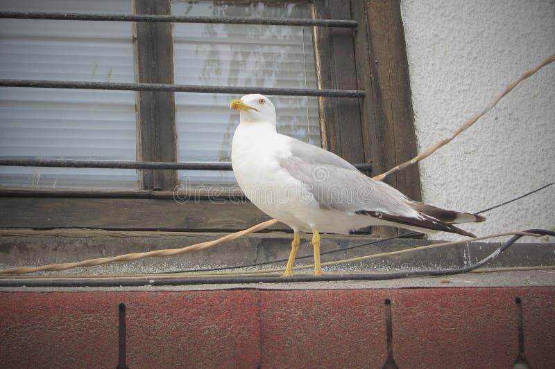 Seagull w seashore miasteczku obraz stock