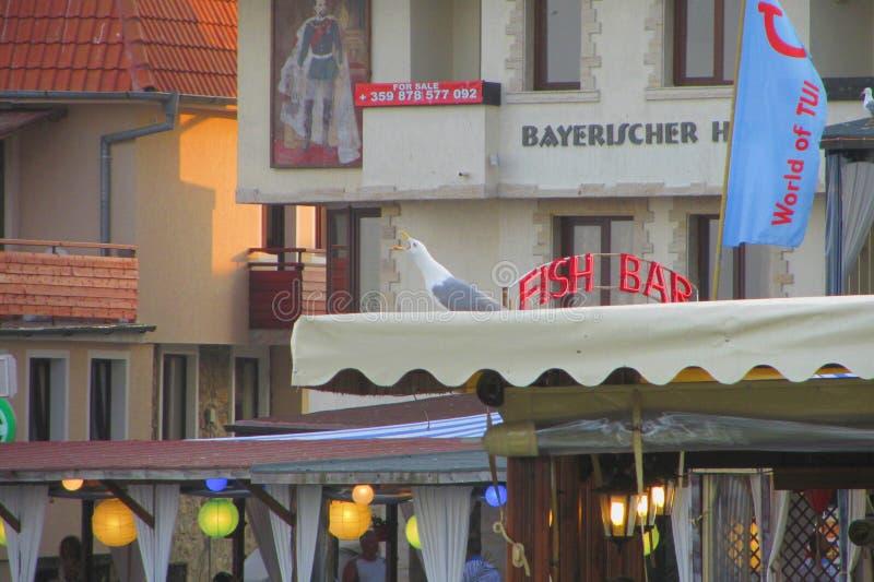 Seagull w seashore miasteczku obraz royalty free