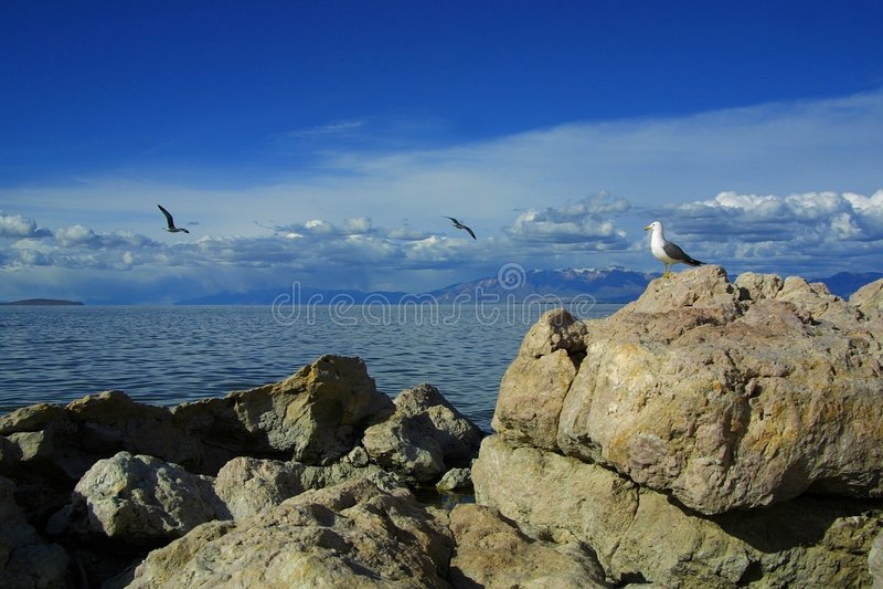 Seagull watching others' flight stock photo