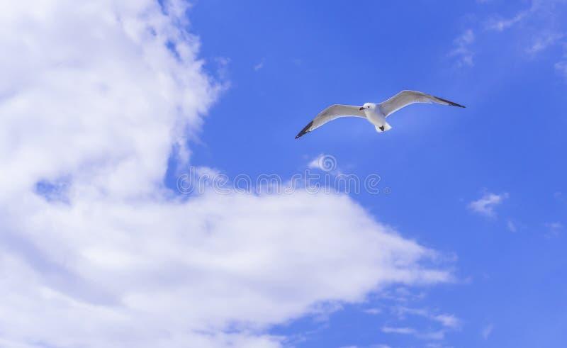 Seagull widok zdjęcia stock