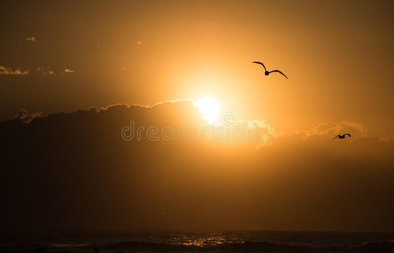 Seagull wschód słońca nad oceanem fotografia royalty free