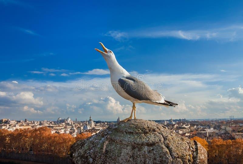 Seagull z Rzym zmierzchu panoramą obrazy stock