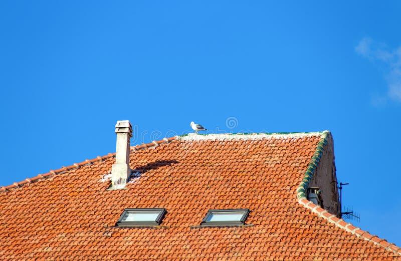 Seagullanseende på ett belagt med tegel tak av ett hus royaltyfria foton