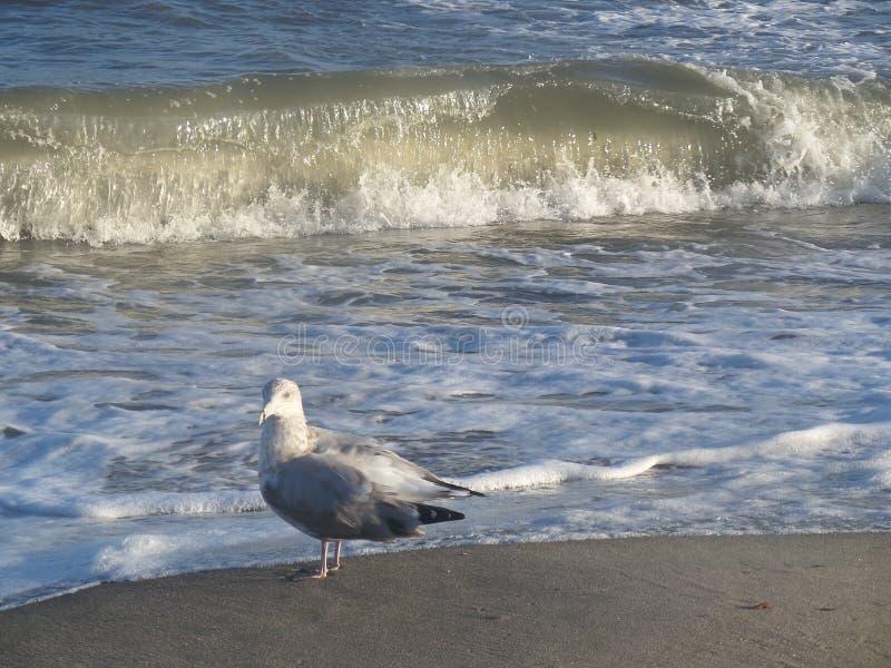 Seagullbad royaltyfri fotografi