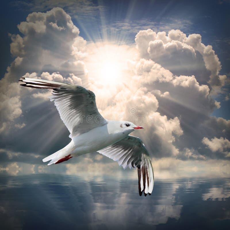 Seagullen. royaltyfri bild