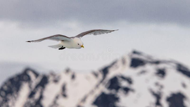 Seagullen skjuta i höjden i himlen royaltyfria foton