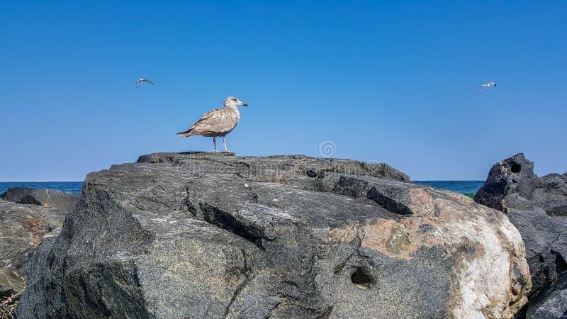 Seagullen vaggar på vid havet med blå sommarhimmel royaltyfri foto