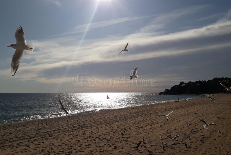 Seaguller över havet arkivfoto