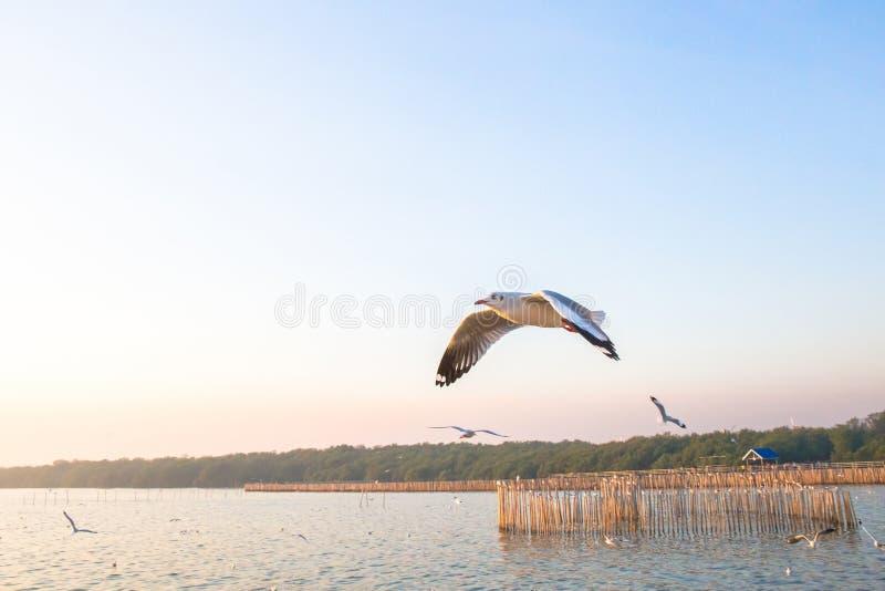 Seagullfågelfluga på havet på smällbajset, Samutprakan, Thailand royaltyfri bild