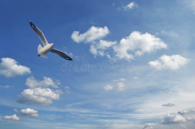 Seagullflyg i den blåa blåa himlen med vita moln, frihet c arkivfoto