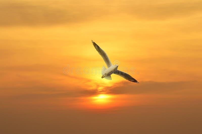 Seagullflyg i solnedgången ovanför havet royaltyfria foton