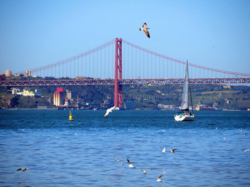 Seagullflyg ?ver r?d broponte 25 de abril fotografering för bildbyråer