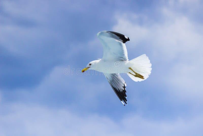 Seagullflyget arkivfoto
