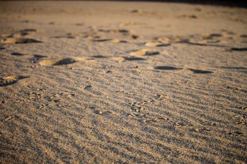 Seagullfotfläckar i sanden royaltyfria foton