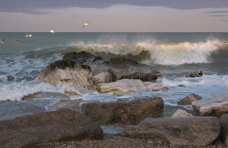 Seagulls που πετούν πέρα από τη θυελλώδη θάλασσα στην περιοχή του Marche, της Ιταλίας στοκ εικόνες