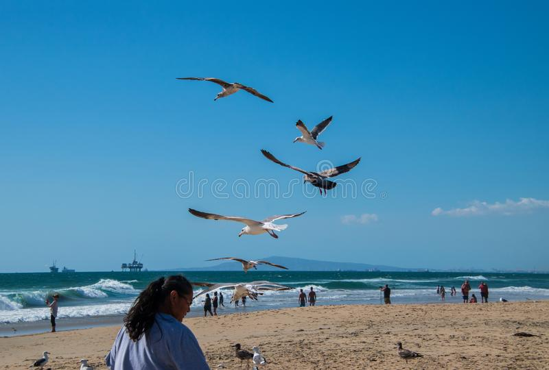 Seagulls βλέπουν πετώντας πέρα από την παραλία κοντά στο κεφάλι μιας γυναίκας Ο ωκεανός είναι ορατός με μια παράκτια πλατφόρμα άν στοκ εικόνες