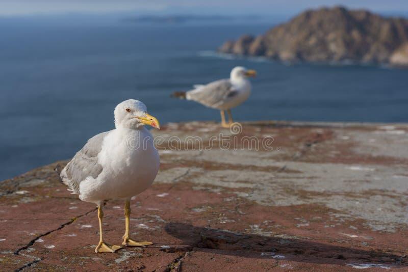 seagulls ζευγαριού στοκ φωτογραφία