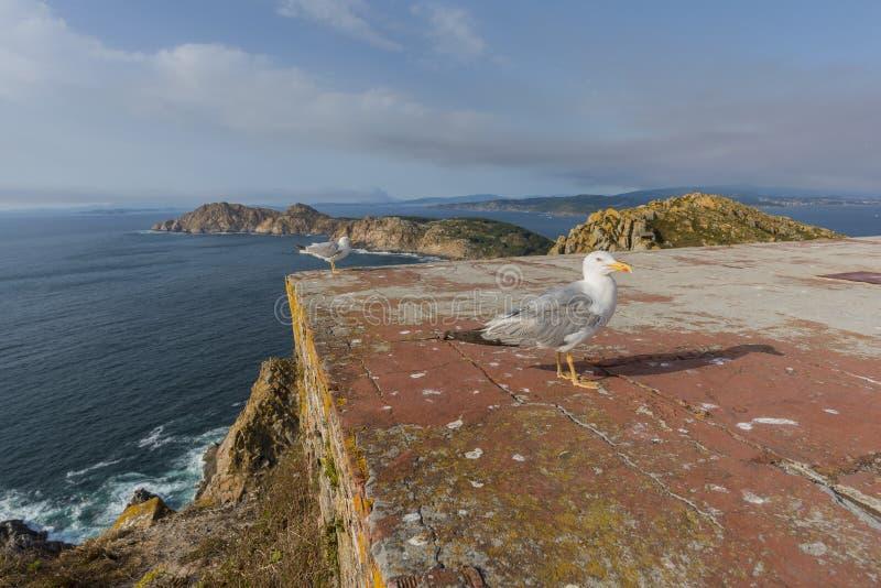 seagulls ζευγαριού στοκ εικόνες