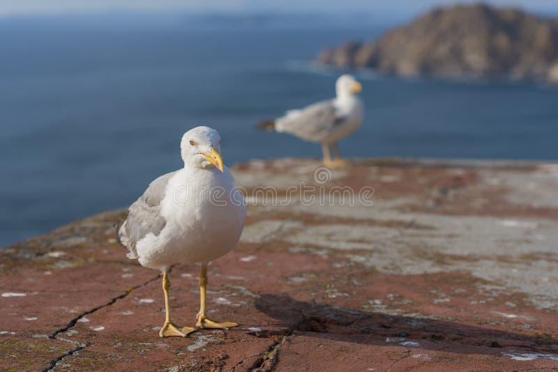 seagulls ζευγαριού στοκ φωτογραφίες με δικαίωμα ελεύθερης χρήσης