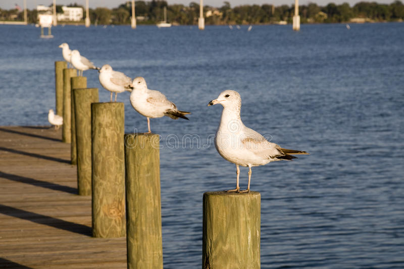 seagulls θέσεων στοκ εικόνες