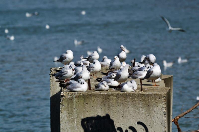 Seagulls θερμός την άνοιξη ήλιος στοκ φωτογραφία με δικαίωμα ελεύθερης χρήσης