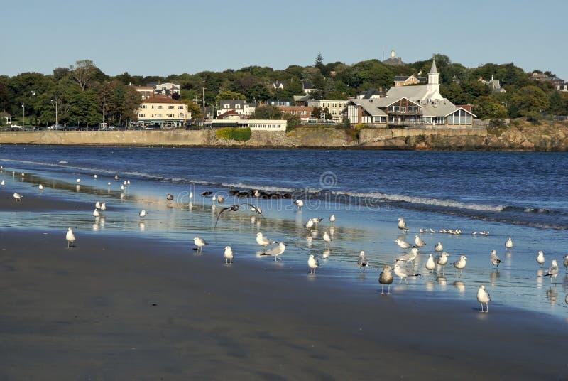 seagulls κοπαδιών στοκ φωτογραφίες