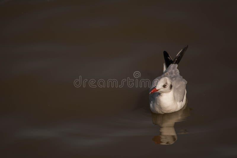 Seagulls κλίση στοκ φωτογραφία