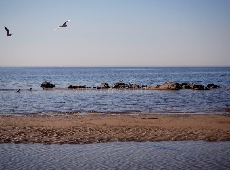 Seagulls πετούν πέρα από το θαλάσσιο νερό στοκ εικόνα
