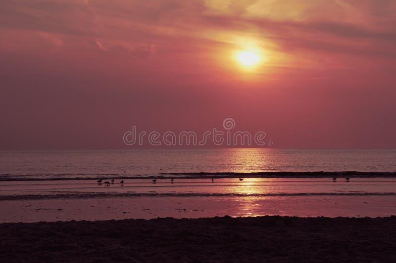 Seagulls που κάθονται σε ένα ηλιοβασίλεμα παραλιών και προσοχής στοκ φωτογραφία με δικαίωμα ελεύθερης χρήσης