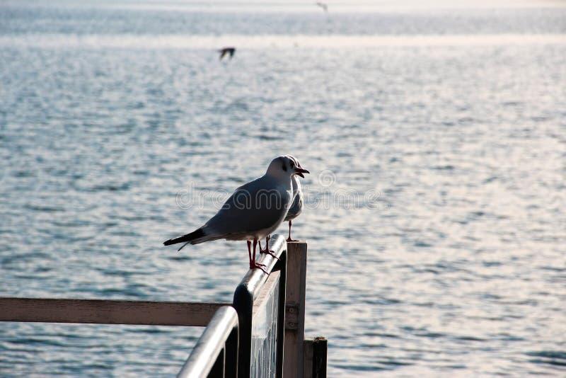 Seagulls που προσέχουν τη λίμνη στοκ φωτογραφίες