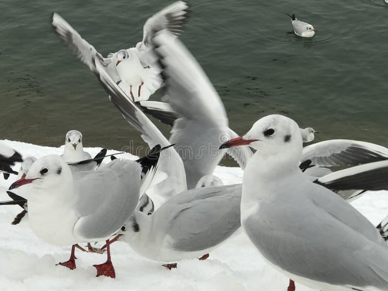 Seagulls που προσέχουν τους ανθρώπους στο χιόνι στοκ φωτογραφία με δικαίωμα ελεύθερης χρήσης