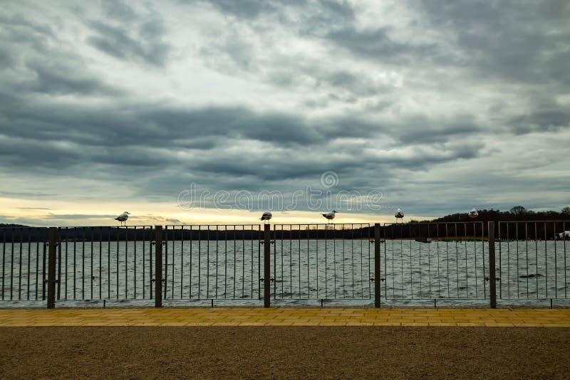 Seagulls που προσέχουν το ηλιοβασίλεμα στοκ εικόνες