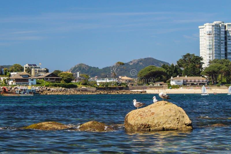 Seagulls που στηρίζονται σε μια καλή ηλιόλουστη ημέρα στοκ φωτογραφία