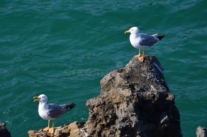 Seagulls που ψάχνουν τα τρόφιμα, αναρριχούνται στους βράχους πέρα από τη θάλασσα στοκ φωτογραφίες