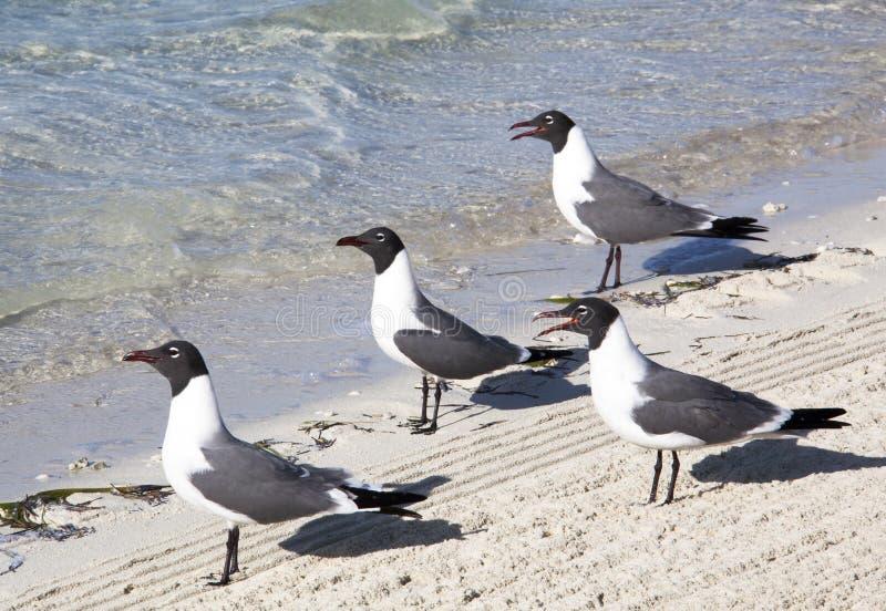 Seagulls προσοχή στοκ εικόνες