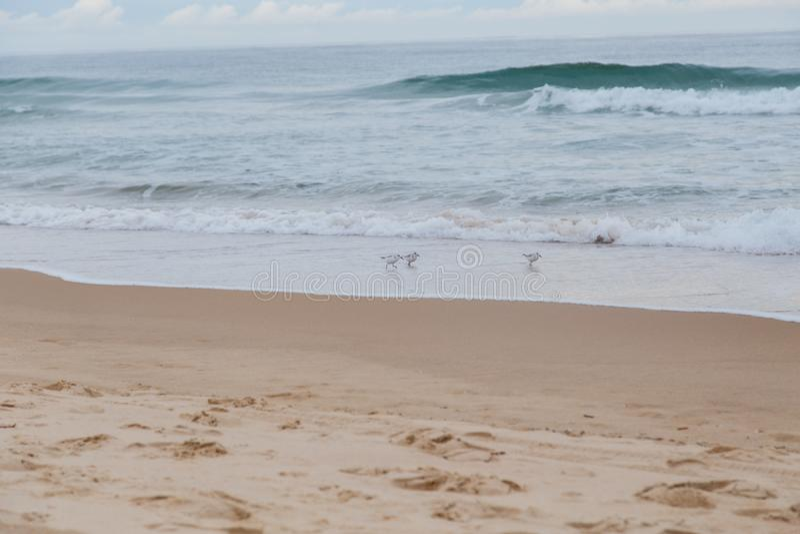 Seagulls στην ακροθαλασσιά στοκ εικόνες